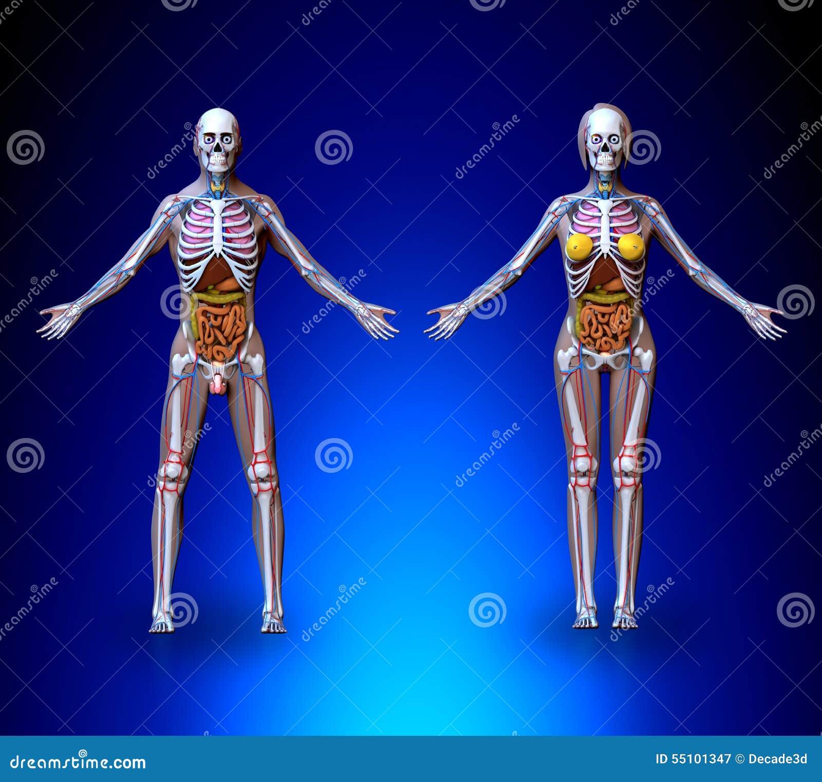 Tolle Weibliche Hormonsystem Ideen - Menschliche Anatomie Bilder ...