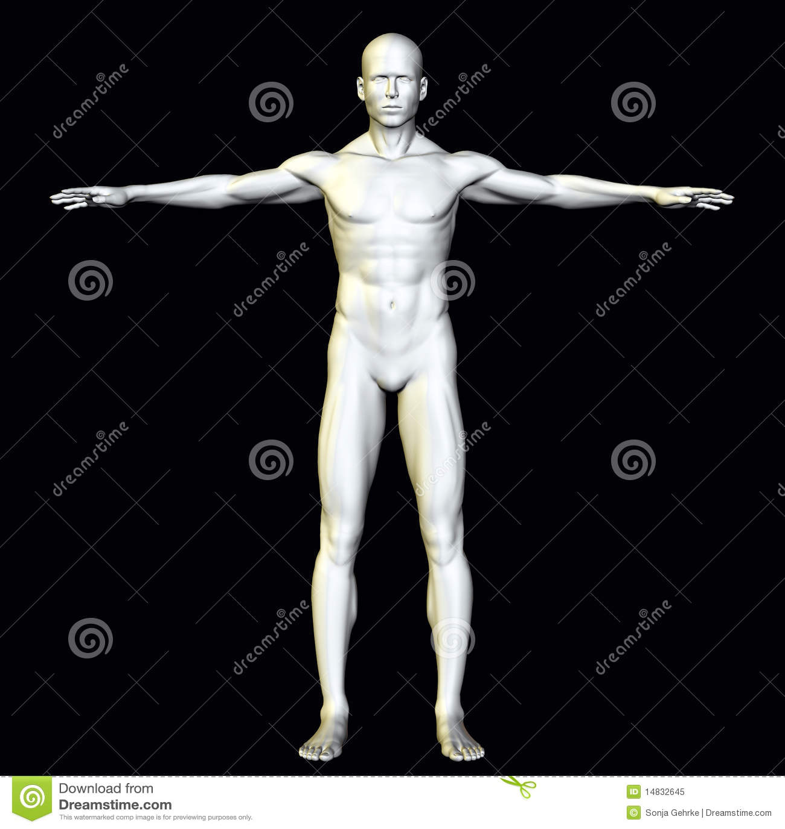Anatomie-Mann stock abbildung. Illustration von kunst - 14832645