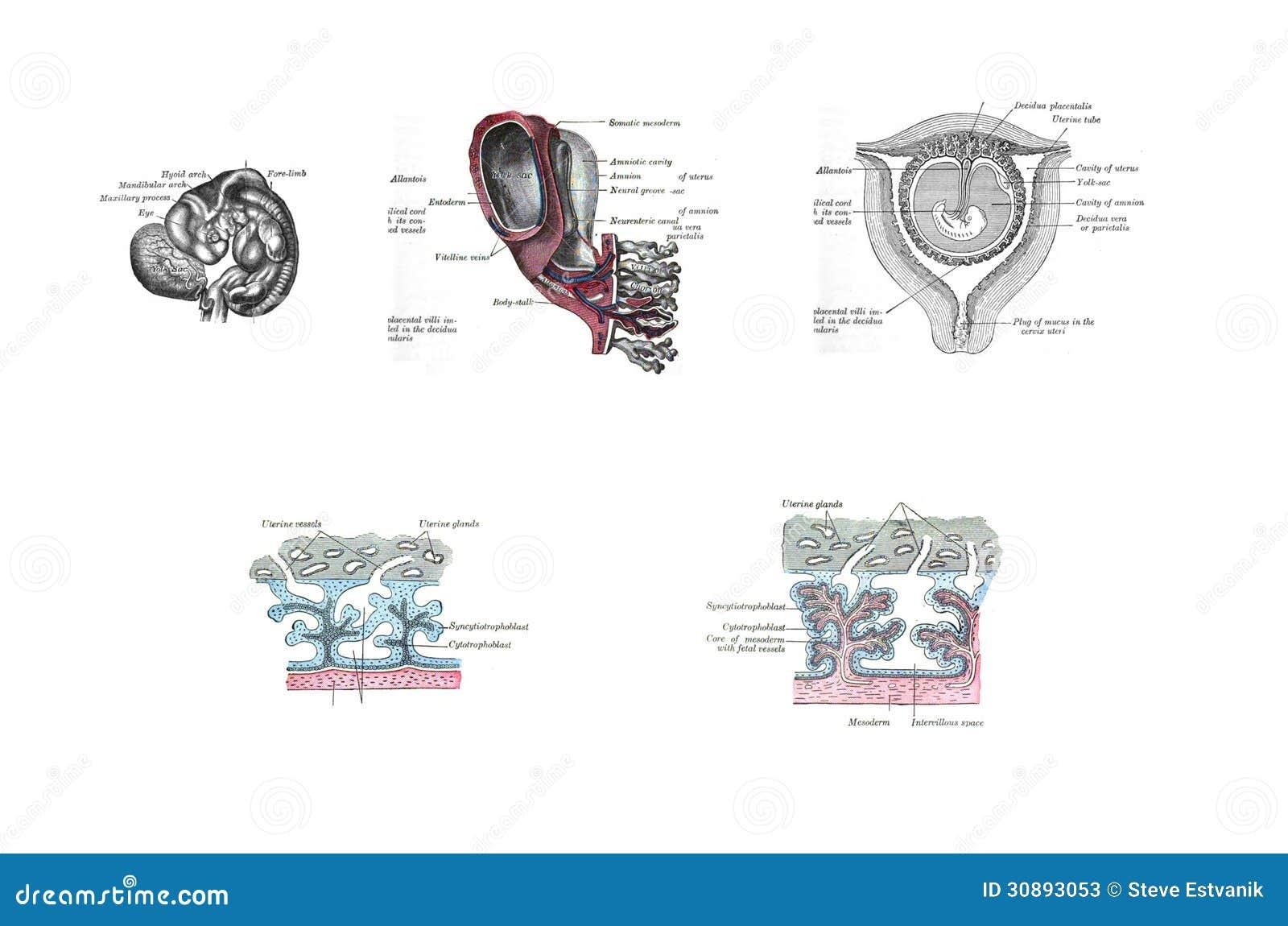 Ausgezeichnet Anatomie Eines Automotors Bilder - Anatomie Ideen ...
