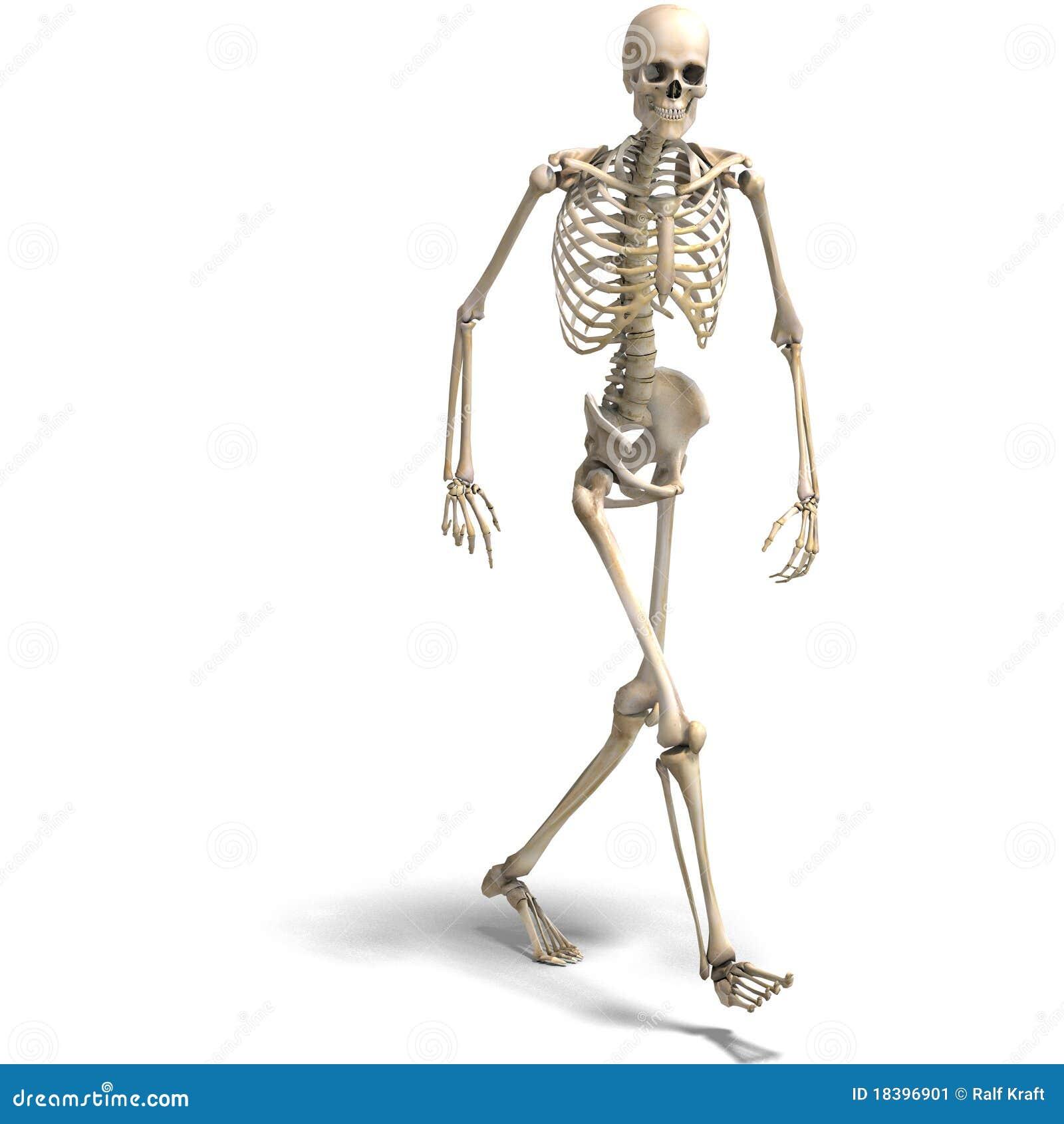 Das menschliche Skelett by jan Kopytov on Prezi