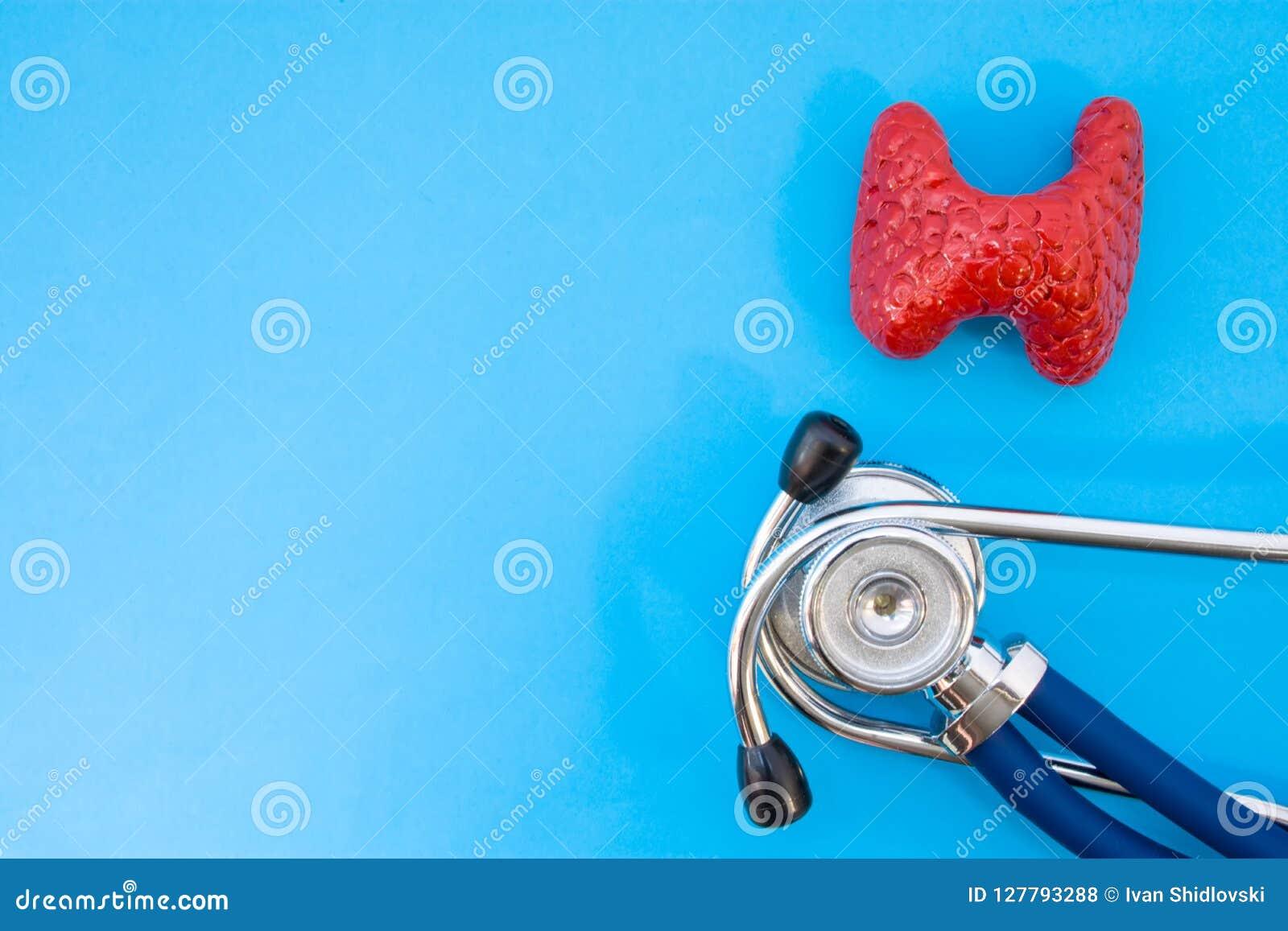 Anatomisches Studienmodell der Schilddrüse und Stethoskop auf blauem Hintergrund besetzen Hälfte des Fotos, im zweiten halb leere