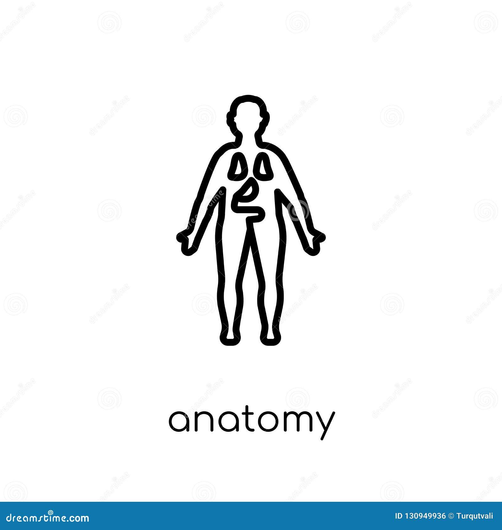 Anatomisymbol Moderiktig modern plan linjär vektoranatomisymbol på w
