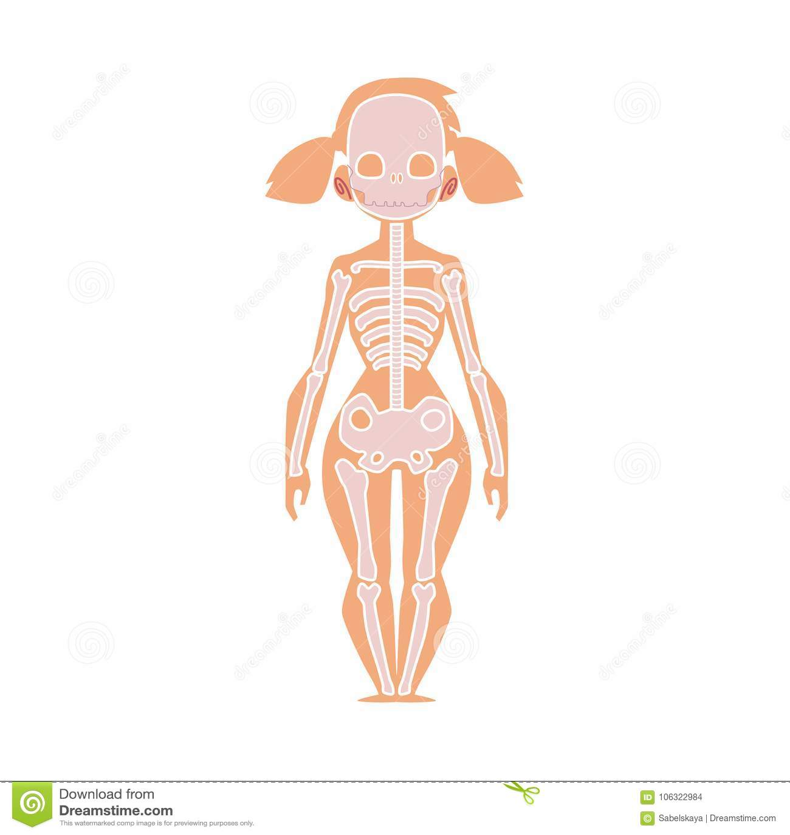 Anatomy Chart Of Human Skeleton, Female Body Stock Vector ...