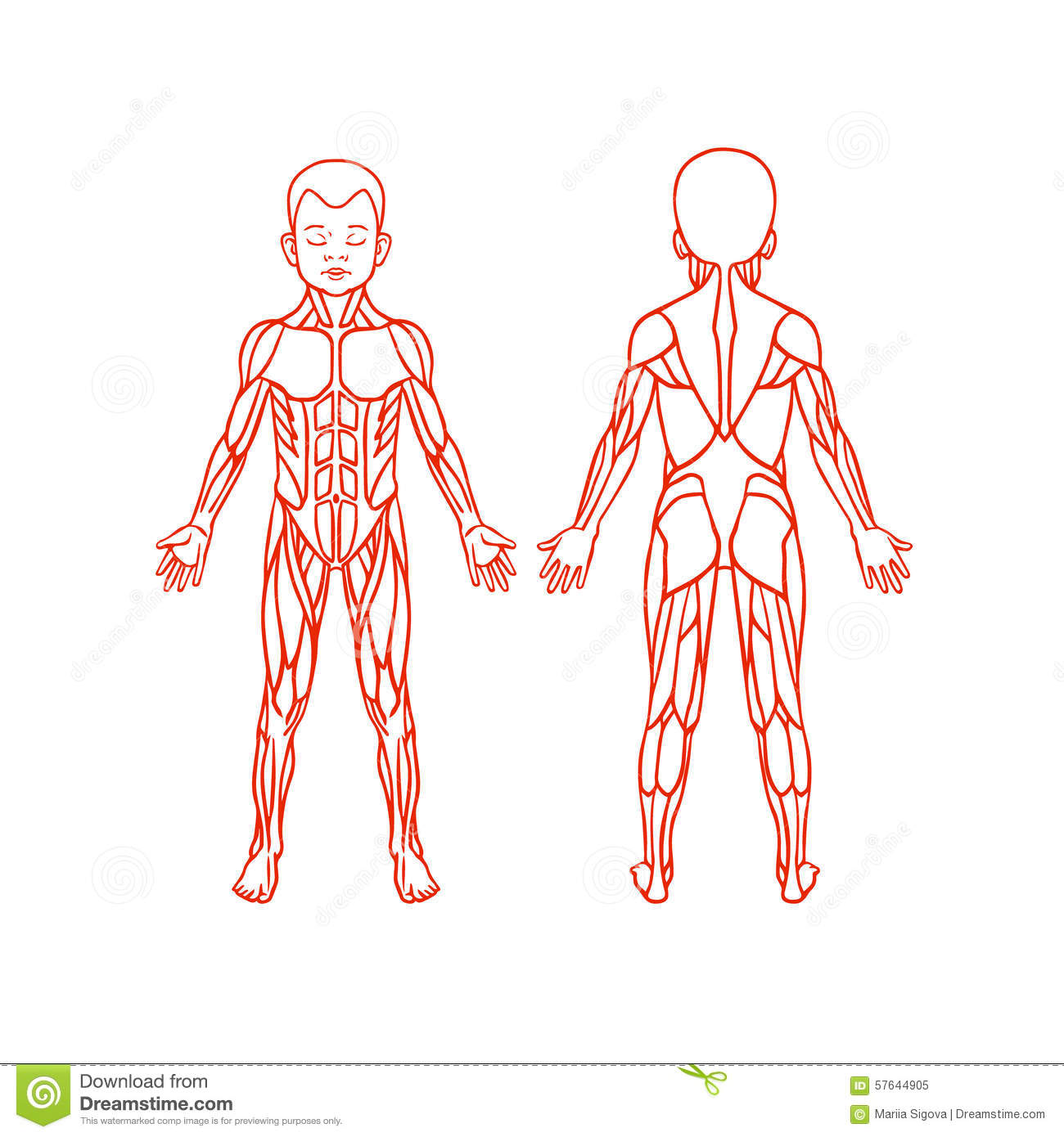 Thigh Popliteal Fossa besides Bmj moreover The Elbow 2 moreover Stock Illustration Anatomy Children Muscular System Exercise Muscle Guide Child Muscle Vector Outline Clipart Front Back View Image57644905 furthermore Skeletal Anatomy Part 1. on figure 9 1 anatomy muscles