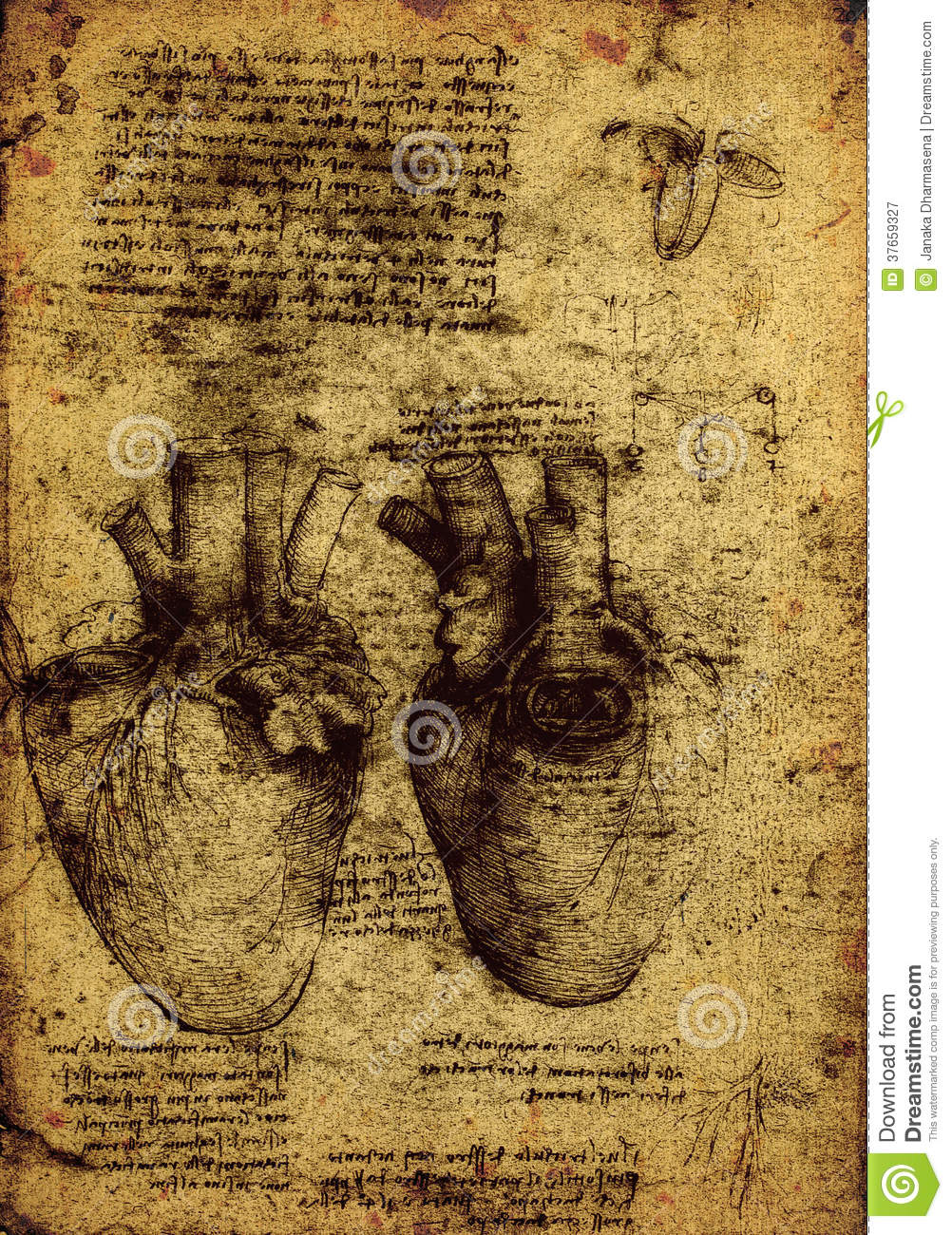 Anatomy Stock Illustration Illustration Of Paper Painting 37659327