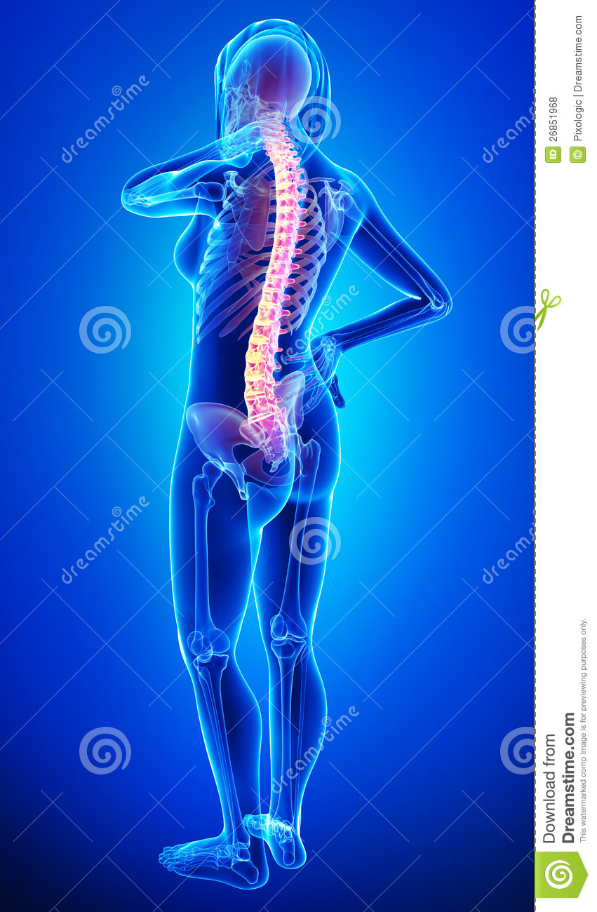 Anatomy Of Female Back Pain Stock Illustration - Illustration of ...