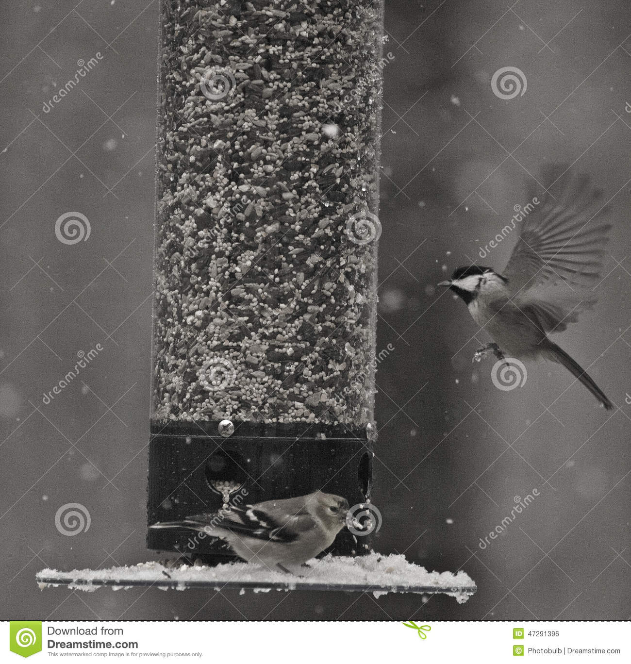 The Anatomy of Flight stock photo. Image of birds, wings - 47291396