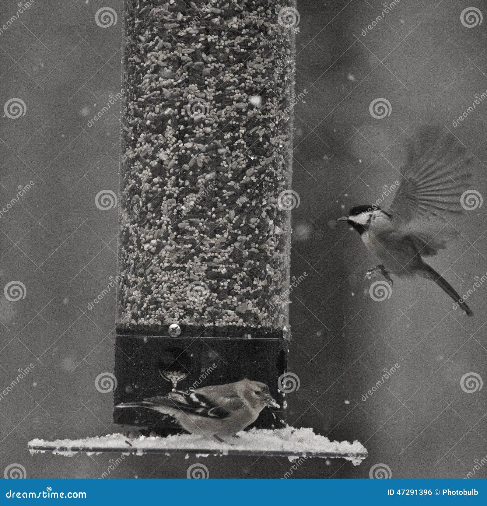 The Anatomy Of Flight Stock Photo Image Of Birds Wings 47291396