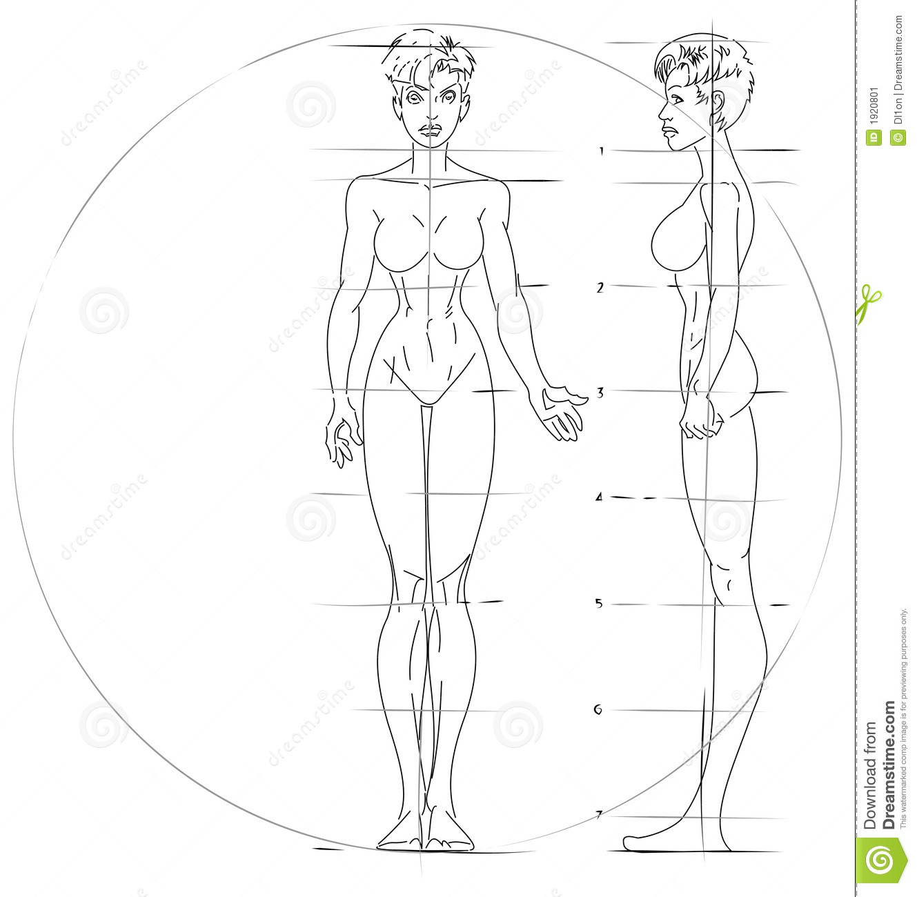 Anatomy Girl Figure Drawing Stock Vector - Illustration of sport ...
