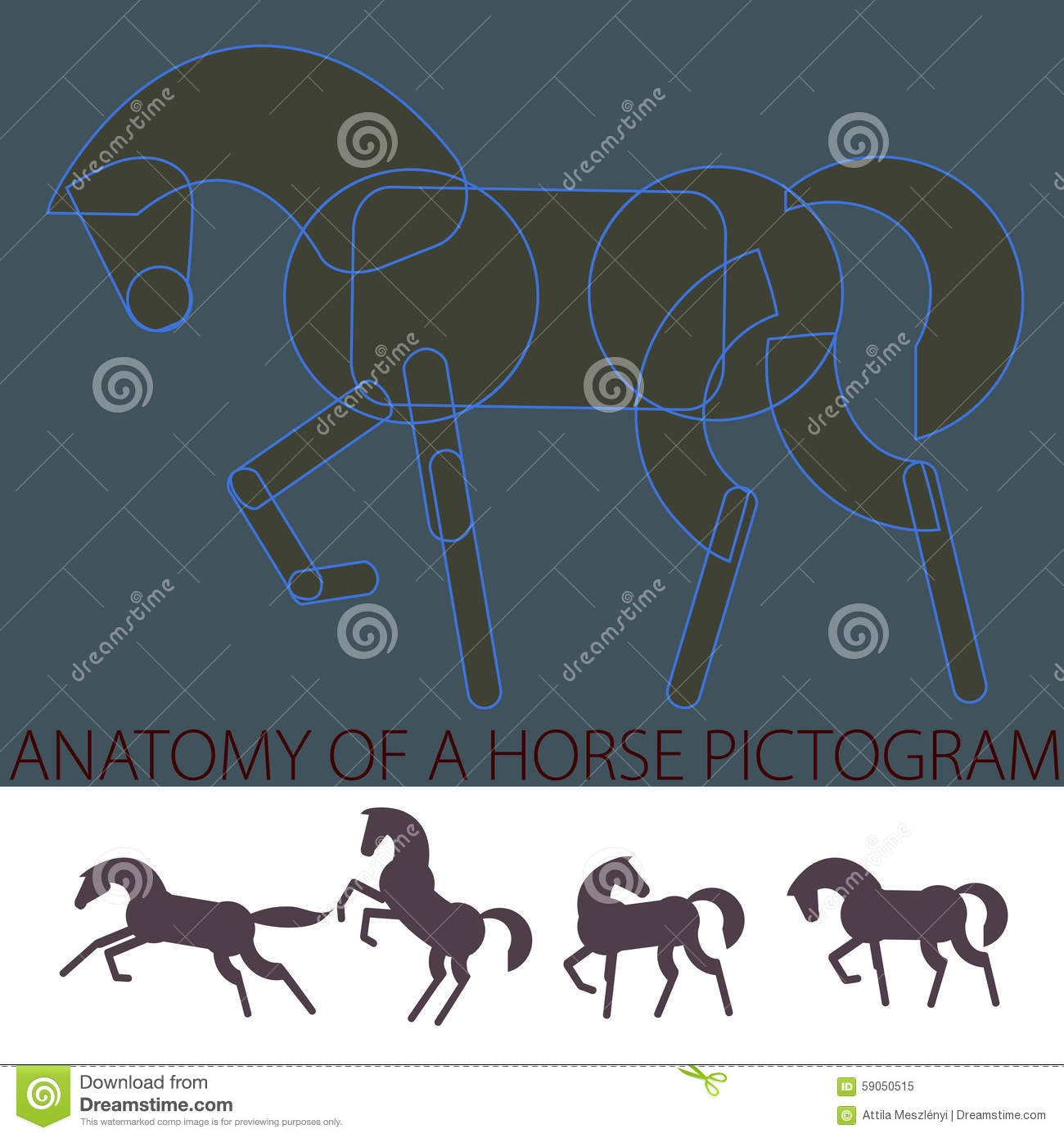 Anatomy Of A Horse Pictogram Stock Vector Illustration Of
