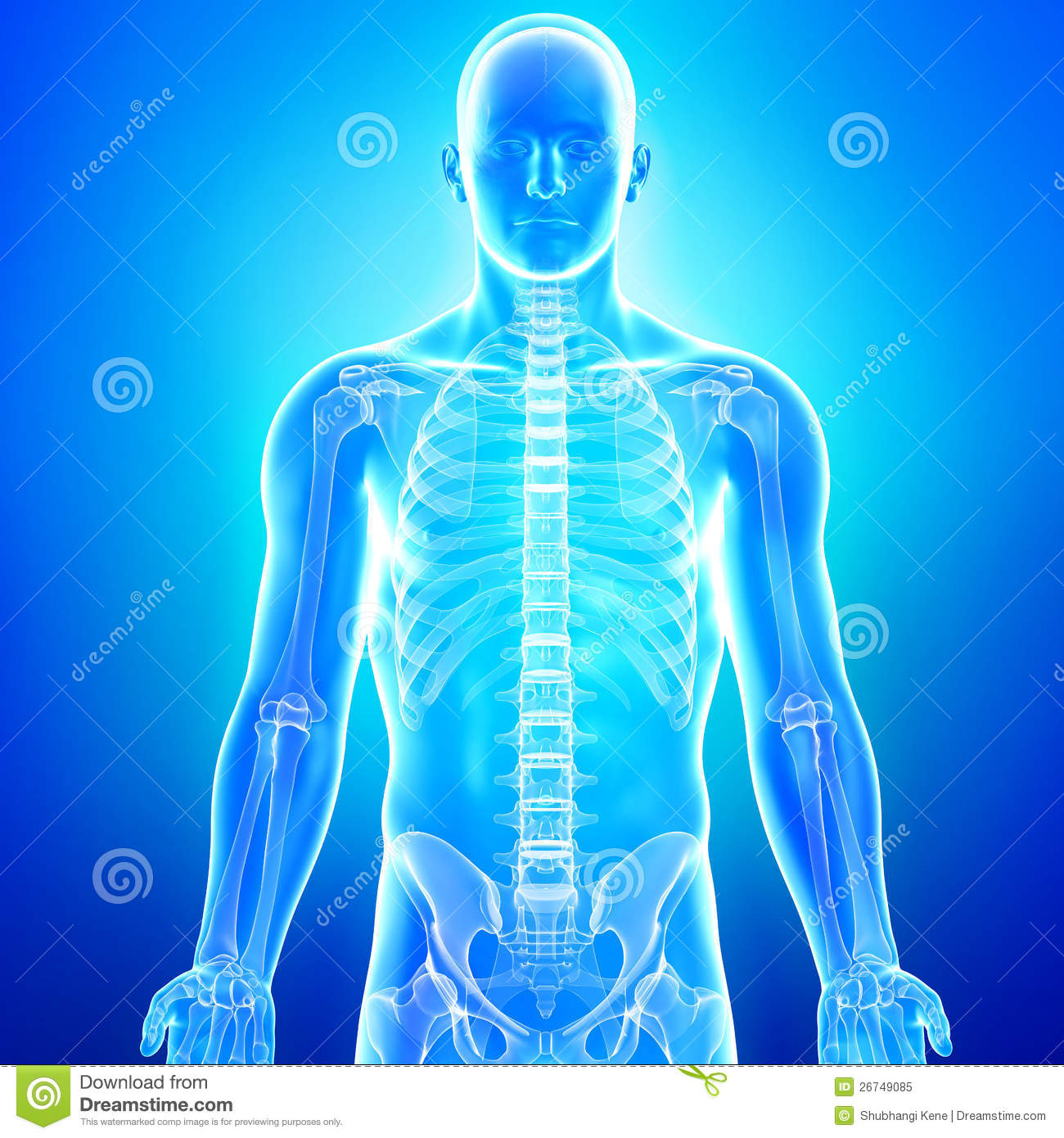 Anatomy Of Human Body In Blue X Ray Stock Illustration