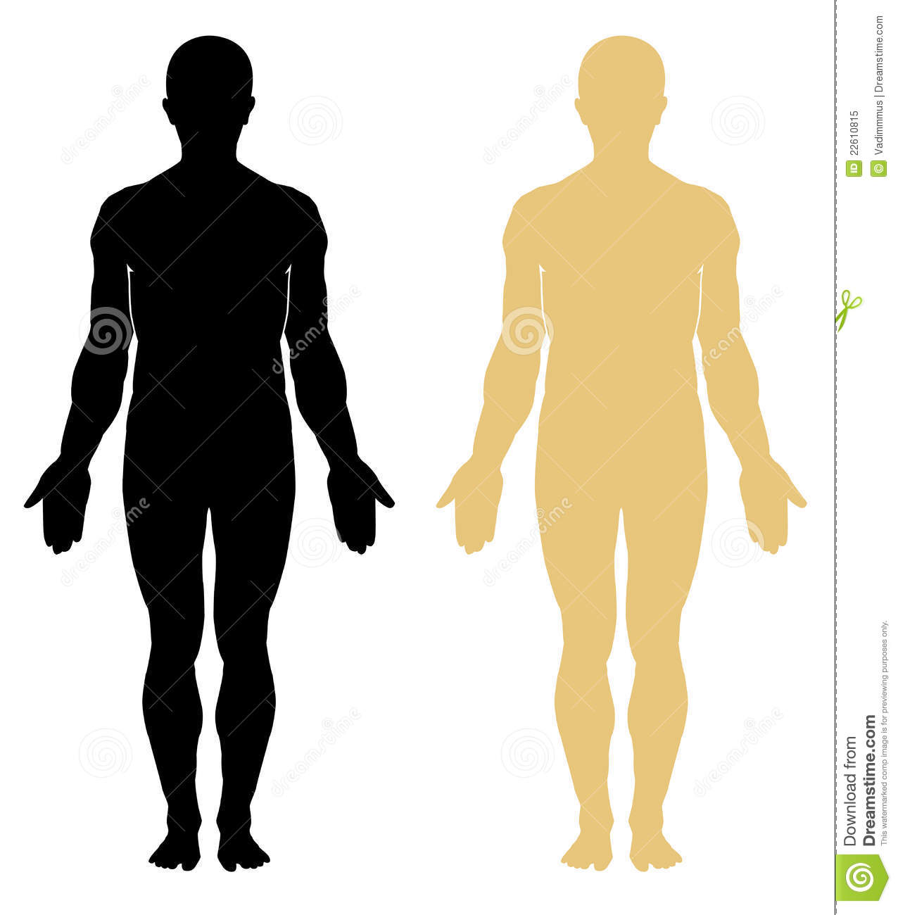 Male Silhouette Anatomy Diagram Great Installation Of Wiring Diagram