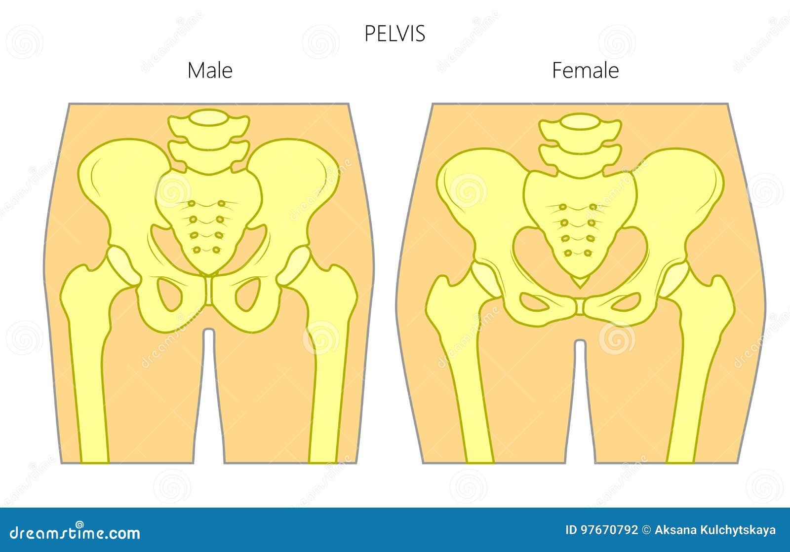 problemas en la pelvis femenina