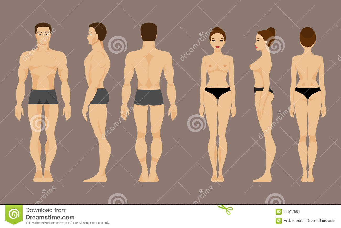Anatomy Of Man And Woman. Vector Illustration Stock Vector ...