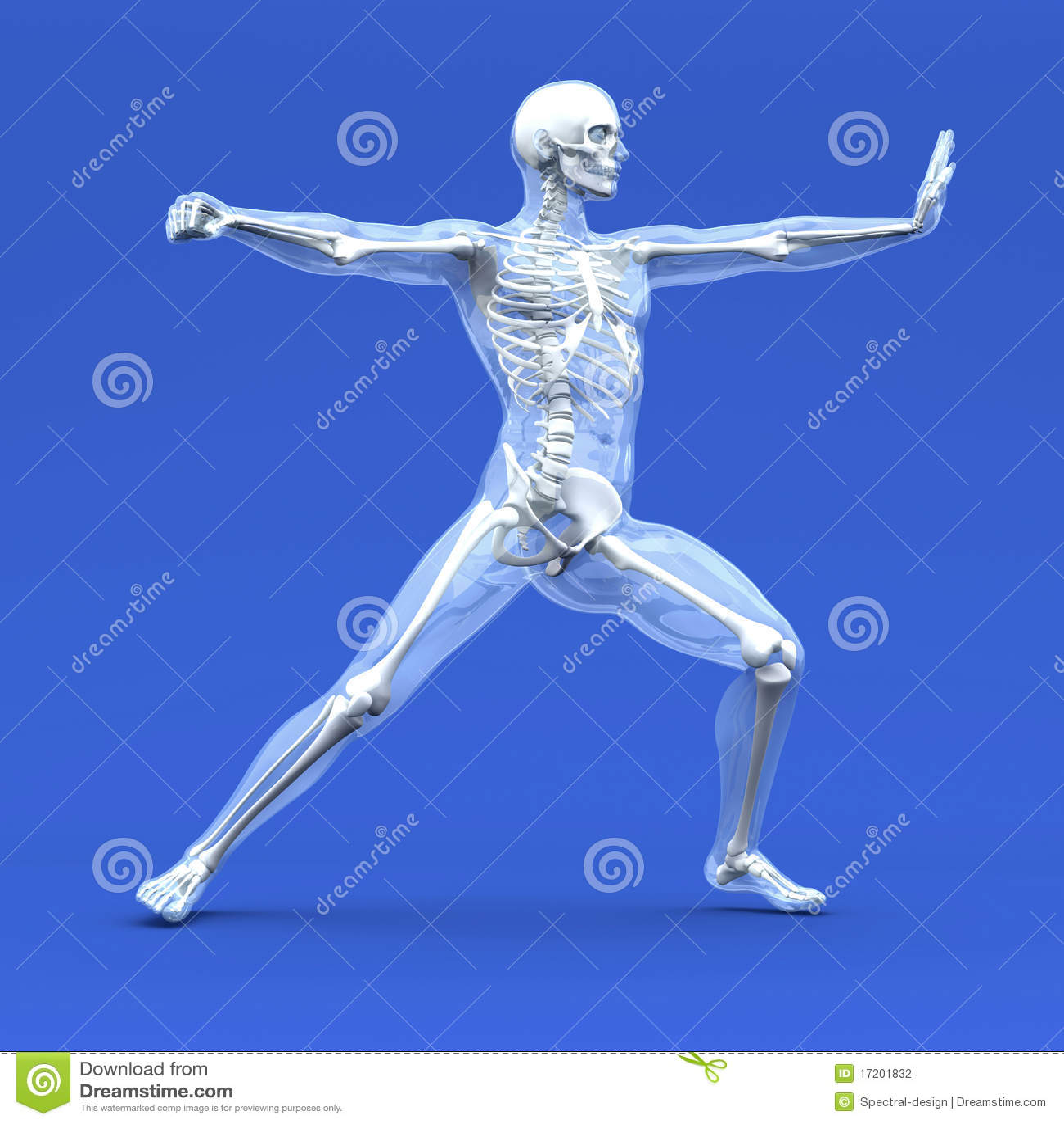 Anatomy for martial artists pdf995