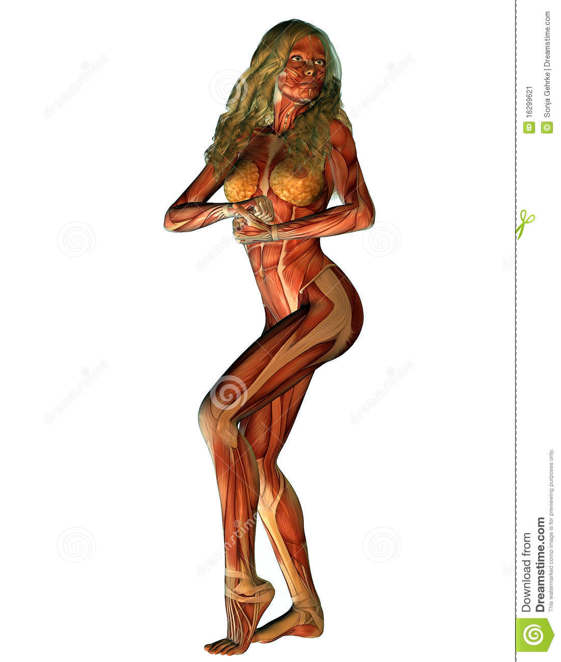... female structure of muscle in strength pose than illustration