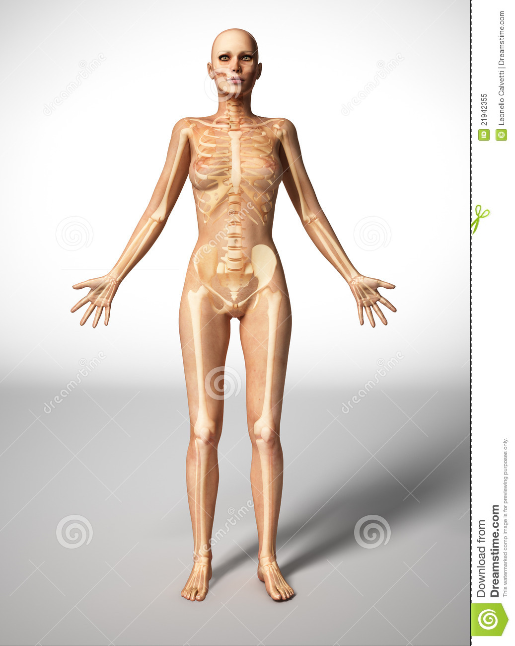 Woman Skeleton Nude 64