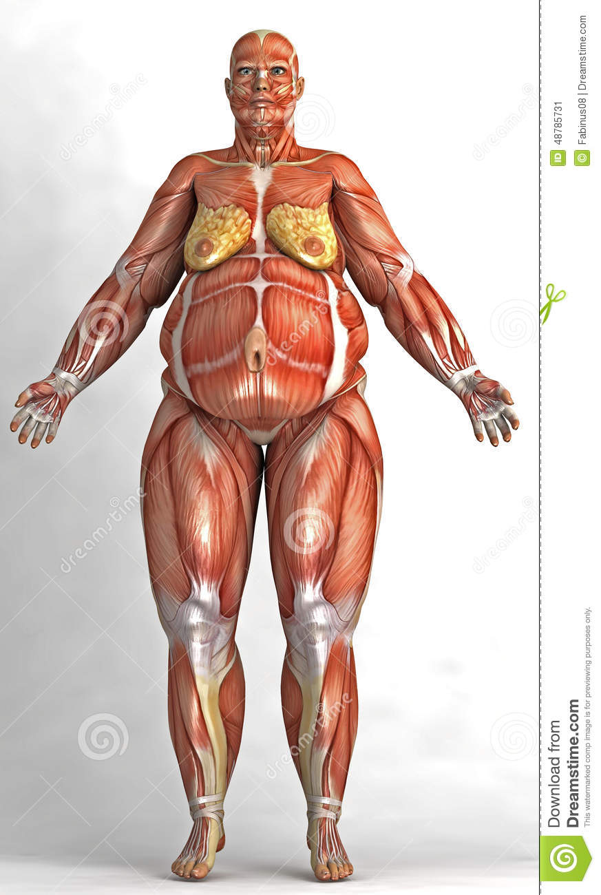3d illustration showing the anatomy of an obese woman on a white ...