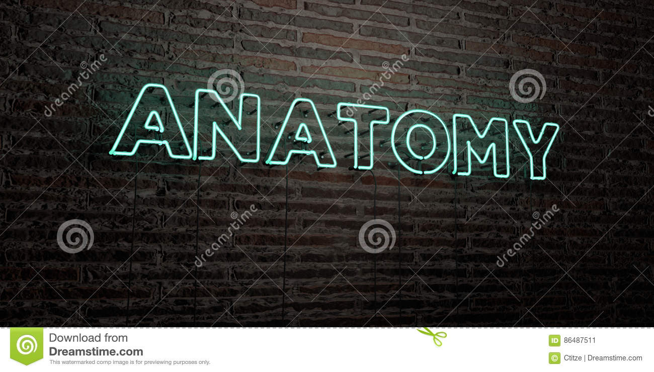 Anatomy Realistic Neon Sign On Brick Wall Background 3d Rendered
