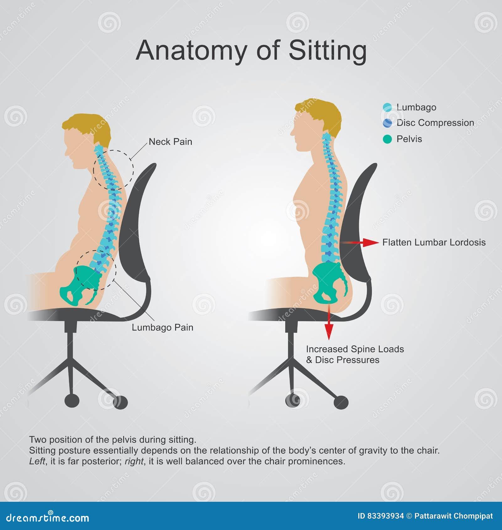 Anatomy of sitting. stock vector. Illustration of human - 83393934