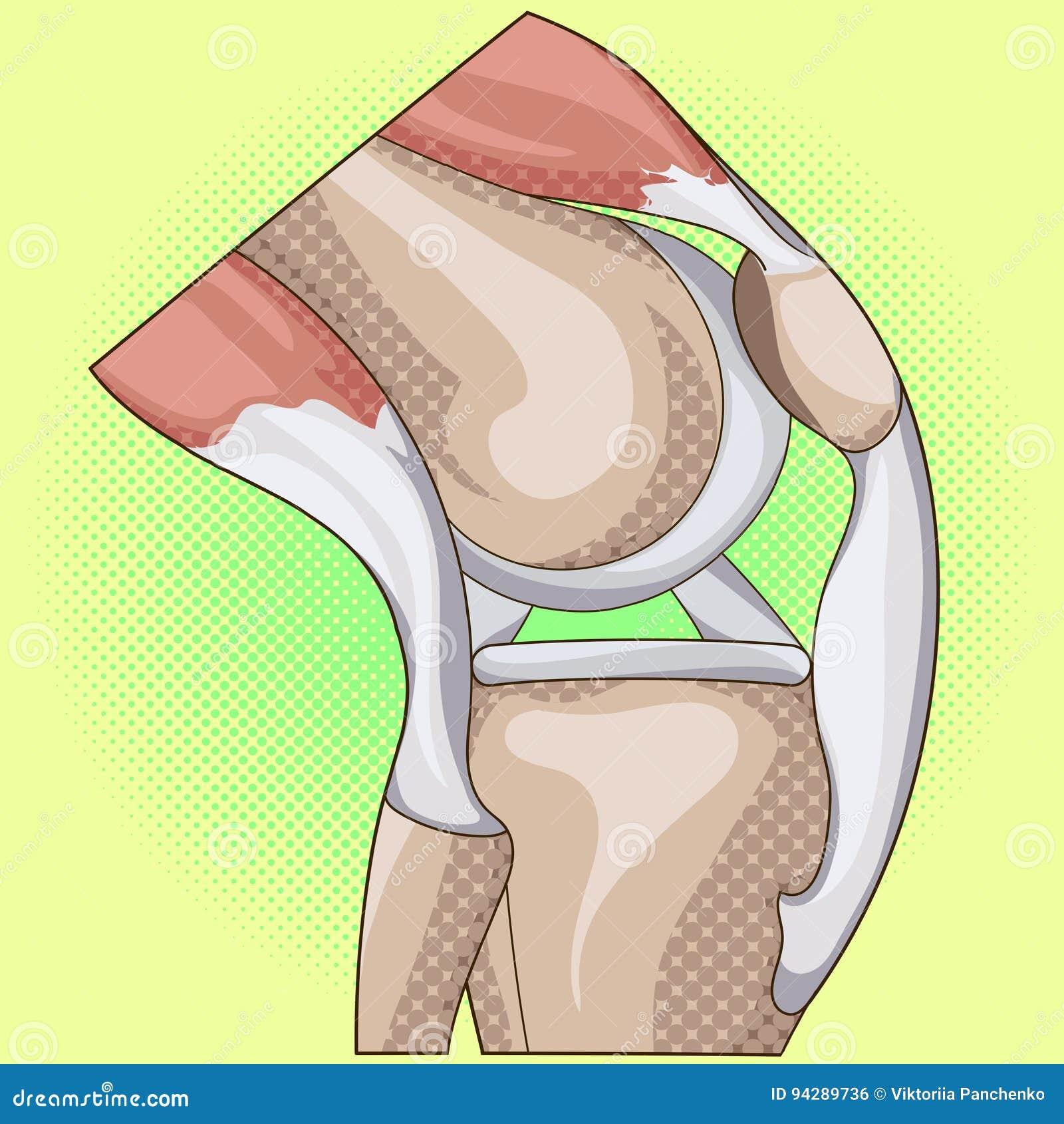 Anatomy. Structure Knee Joint Vector Pop Art Design Stock Vector ...