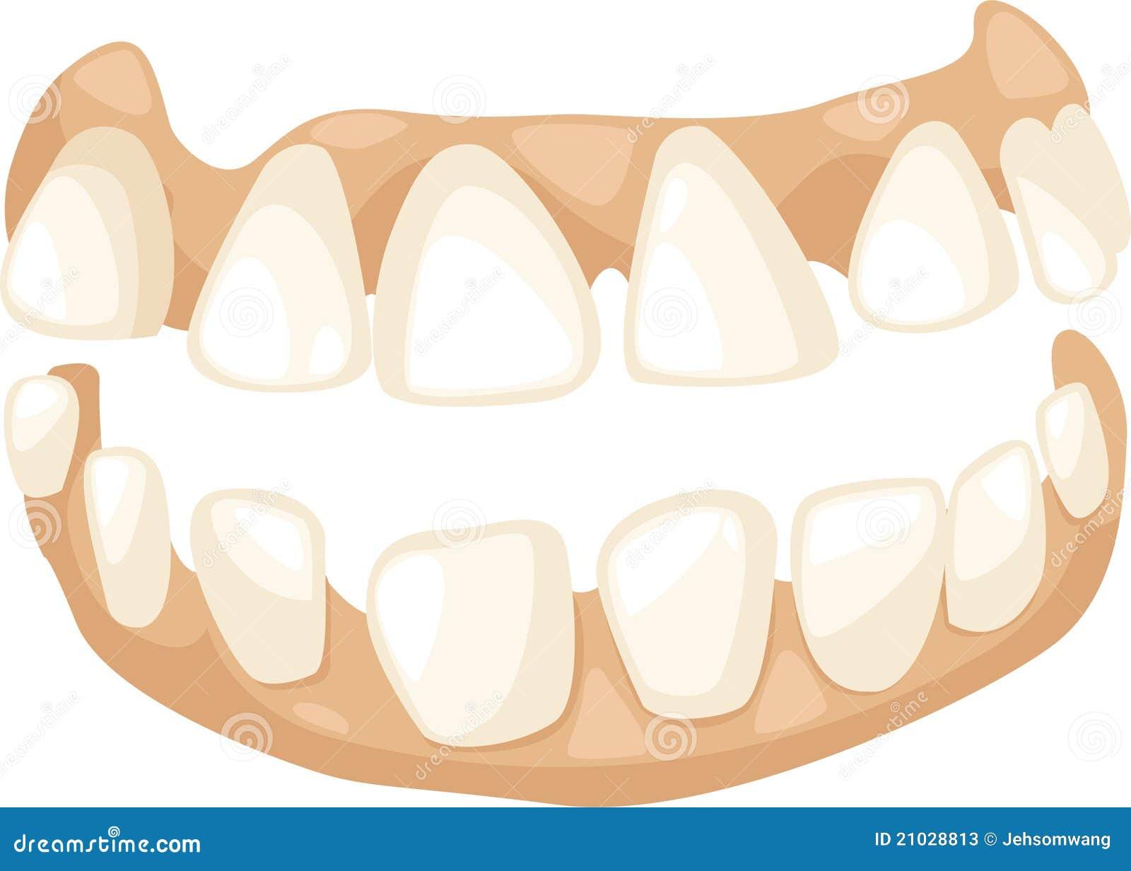 Anatomy teeth vector stock vector. Illustration of cartoon - 21028813