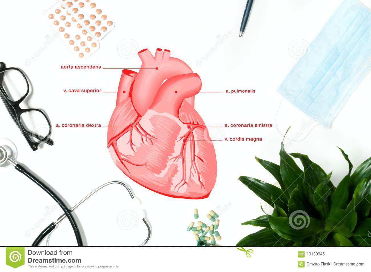 Anatomy. Workplace Of Doctor With Medical Items Stock Illustration ...