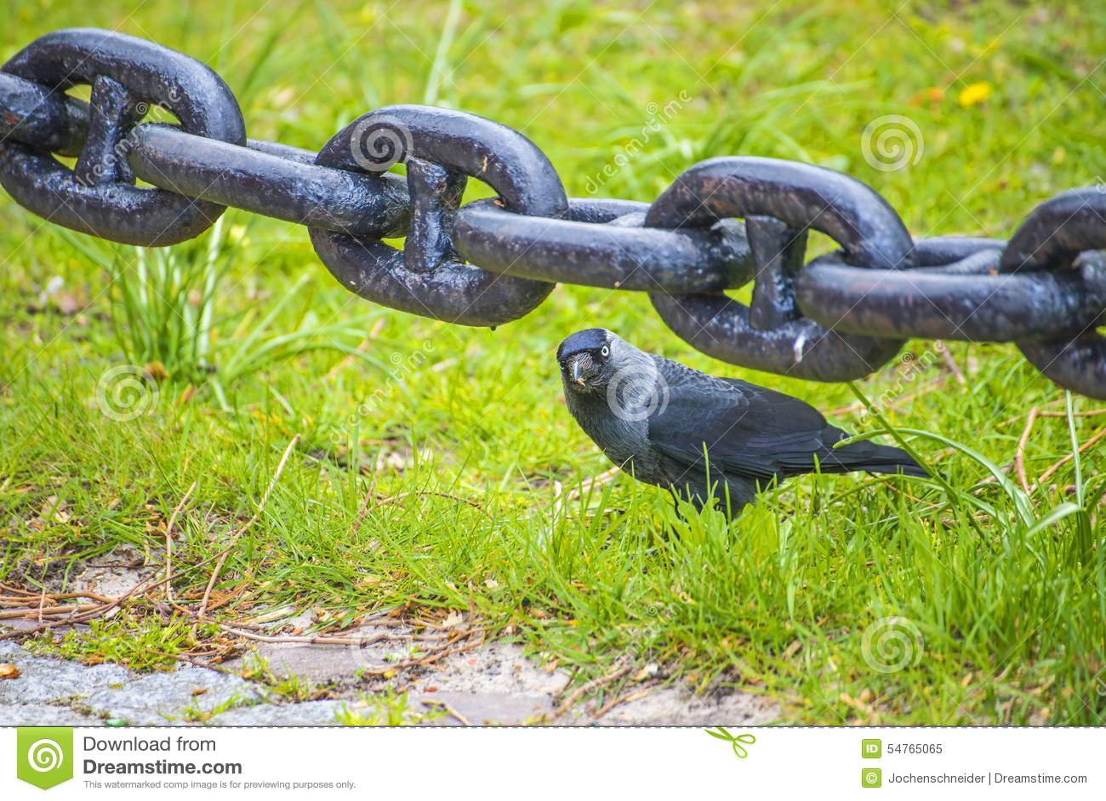 z 547 z chain
