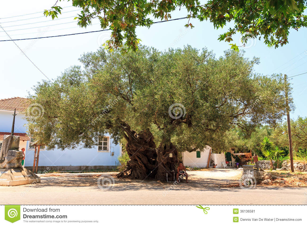 Ancient Olives Stock Image - Image: 36136581