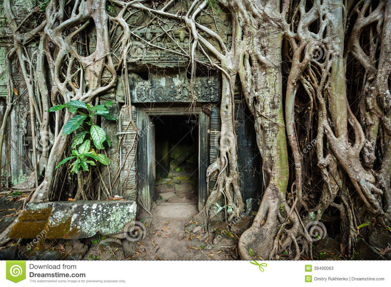 Ancient stone door and tree roots ta prohm temple angkor for Door of stone