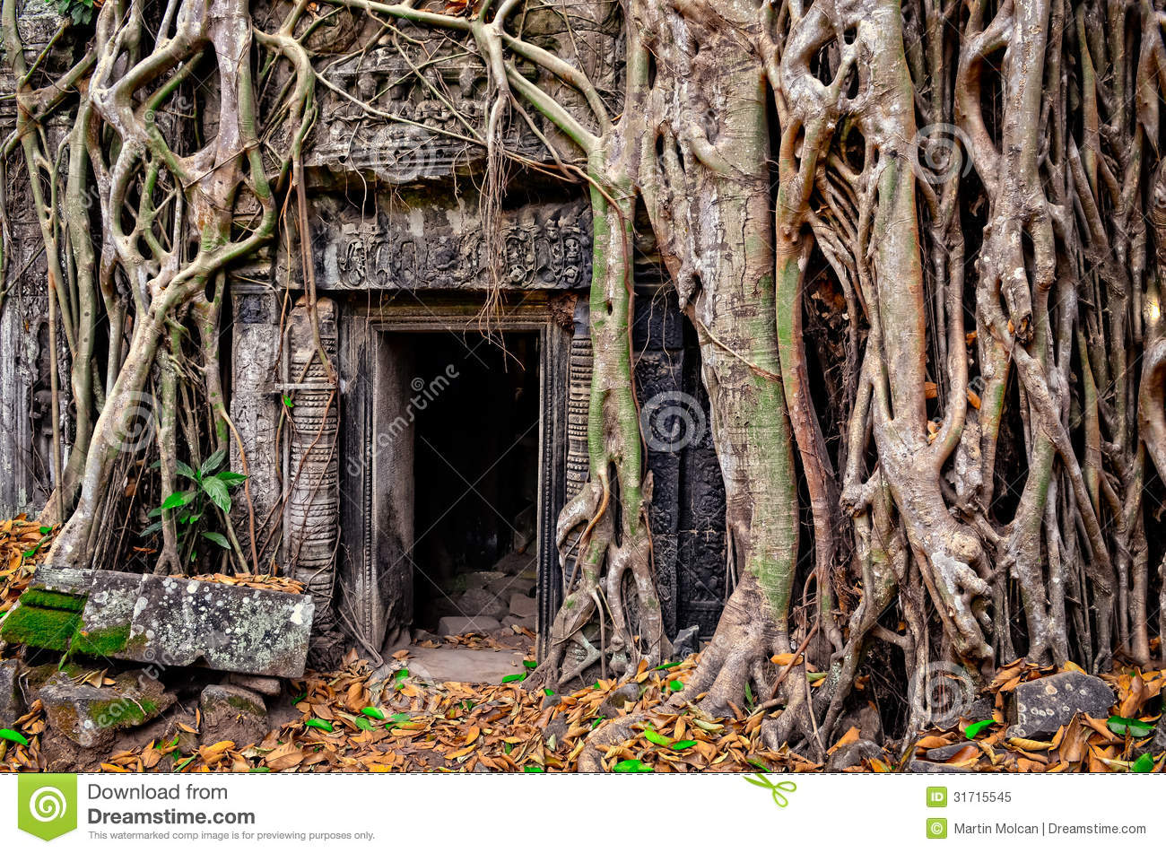 Ancient stone temple door and tree roots stock image for Door of stone