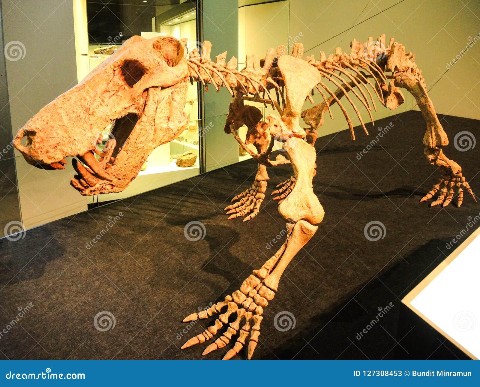 Ancient Tiger Dinosaur Skeleton Display At Melbourne Museum