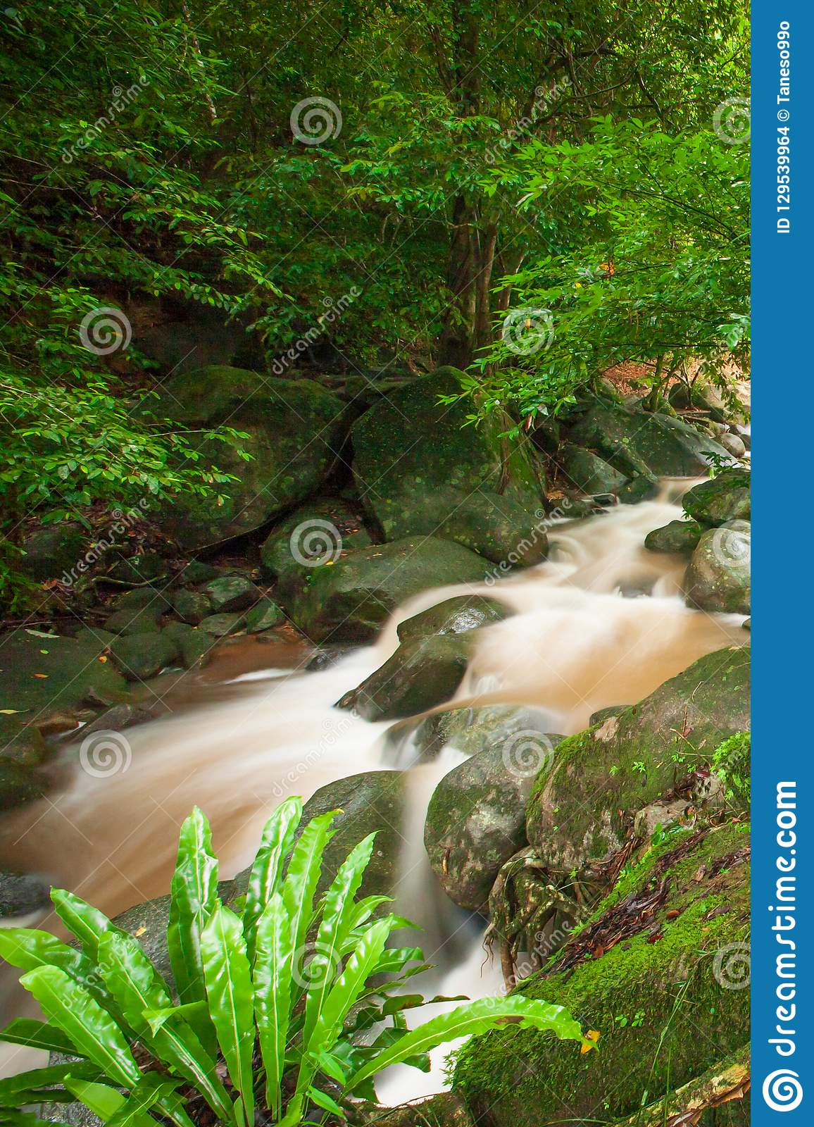 Ancient tropical forest with waterfall in rainy. Fresh flora, Ne