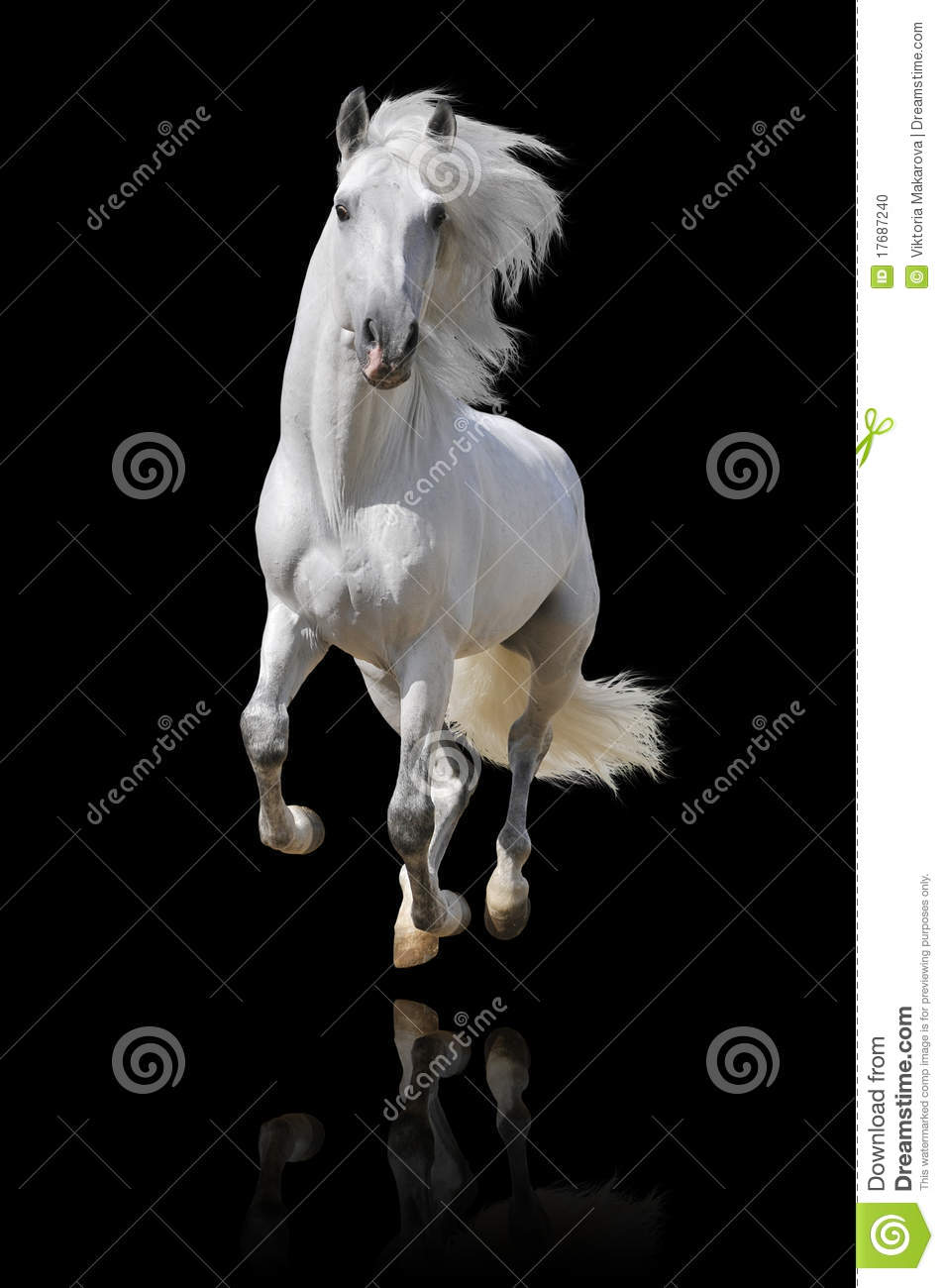 Andalusian häst isolerad white