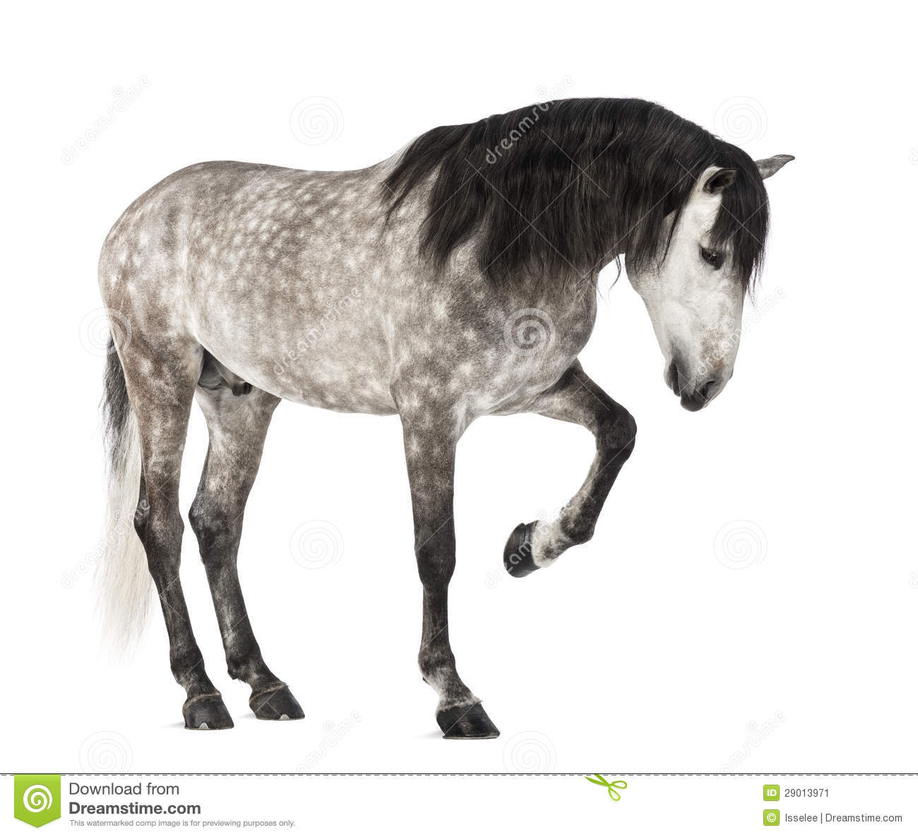how to say horse in spanish
