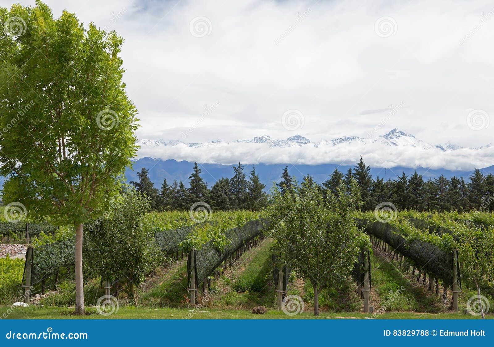 Andes Vinhedo Vale De Uco Mendoza Foto De Stock Imagem De