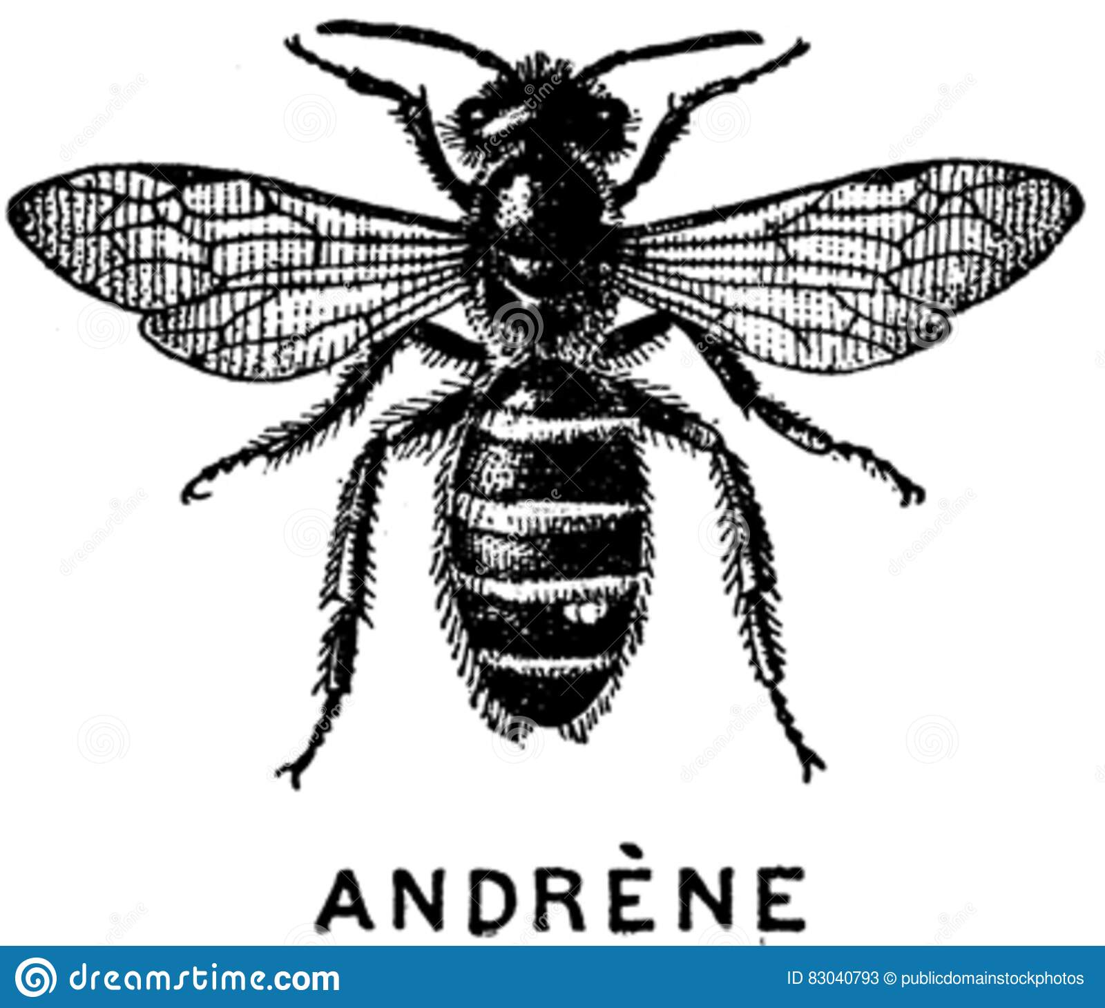 Download Andrene-OA stock image. Image of  - 83040793