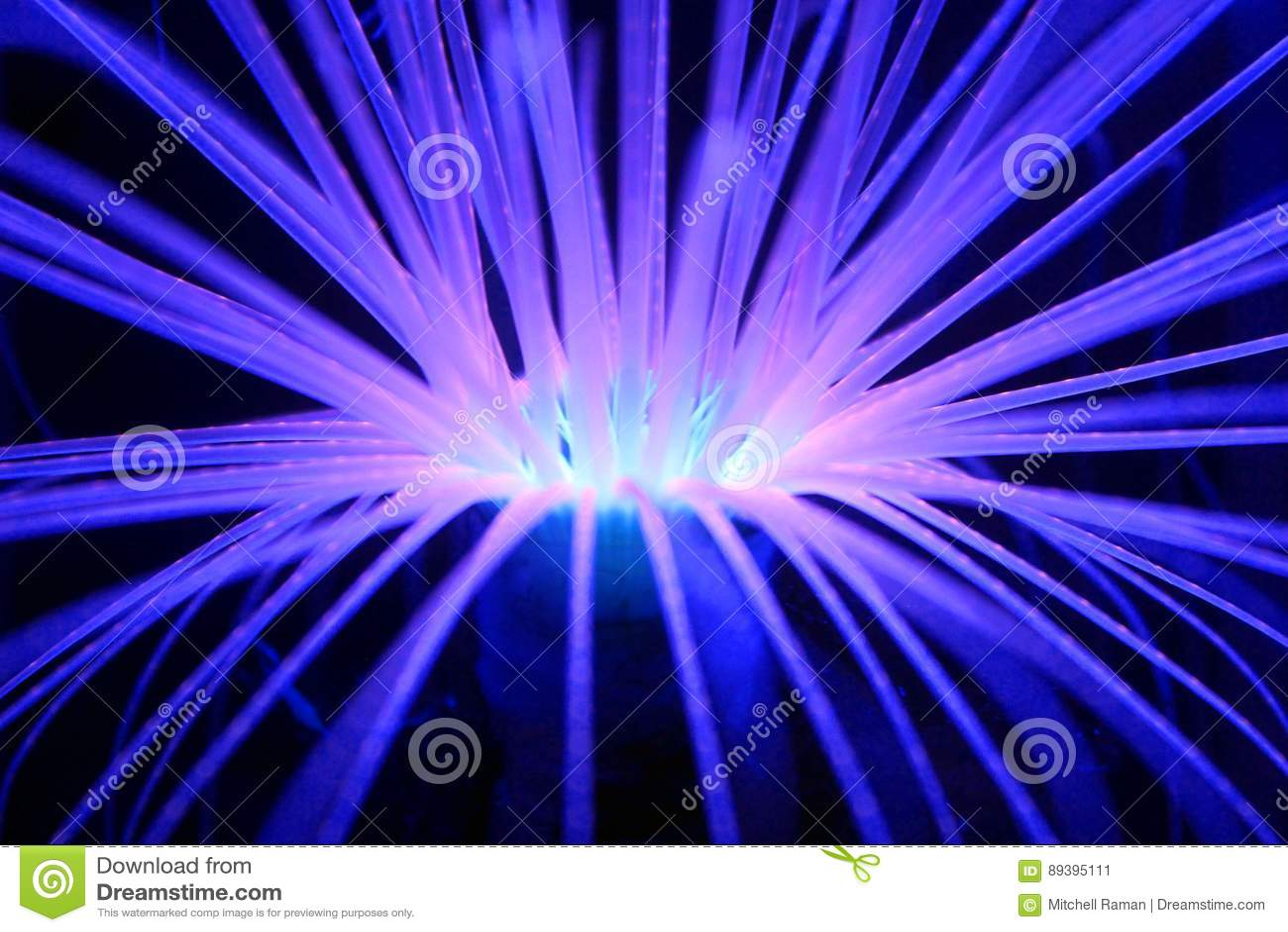 Anemone blu d ardore