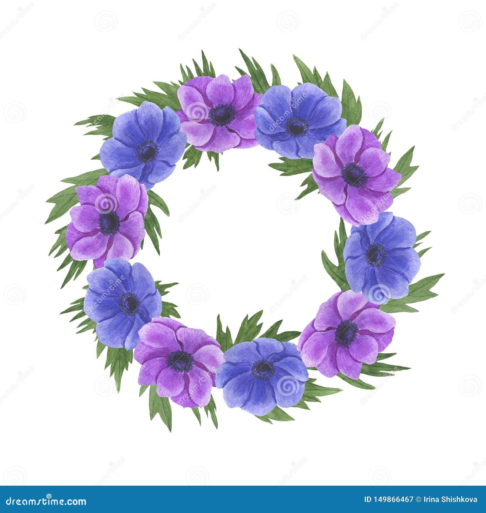 Anemone Frame-de de illustratiereeks van de bloemenwaterverf de zomer botanische decoratie ontwerpt de groetkaarten van huwelijks