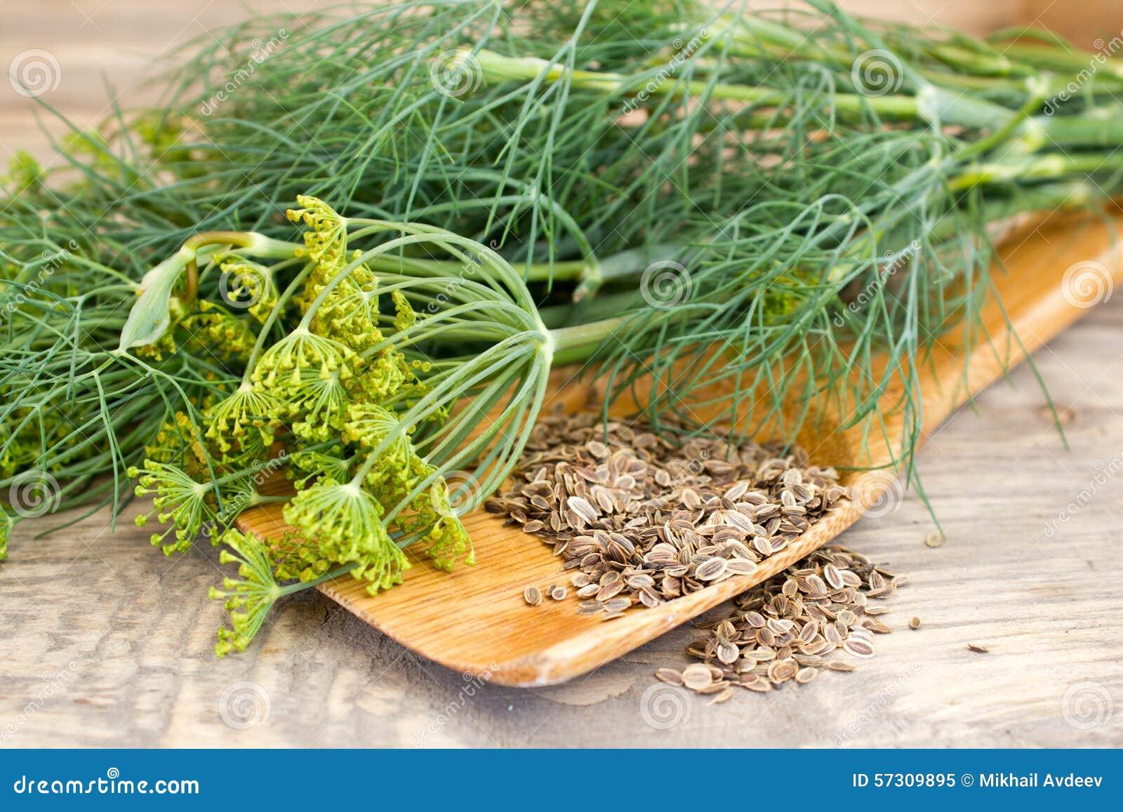 Aneth et graines