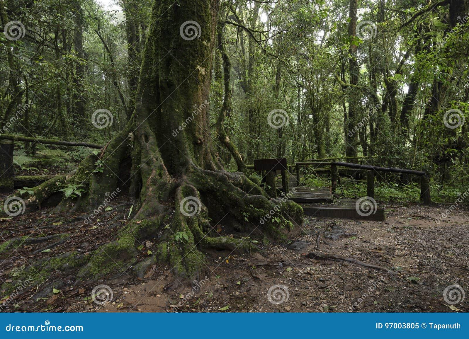 Ang Ka Luang Nature Trail al parco nazionale di Doi Inthanon, Chiang