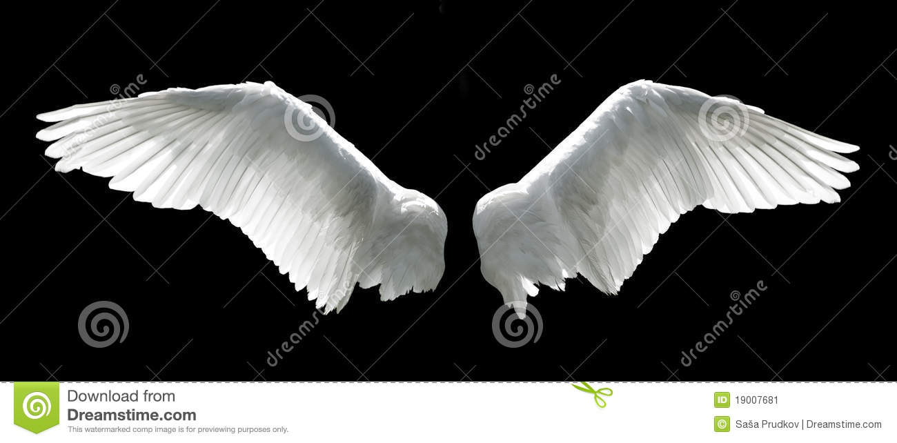 Sun Sets On Outspread Wings Of Angel In >> Angel Wings Stock Image Image Of Fragile Spread Huge 19007681