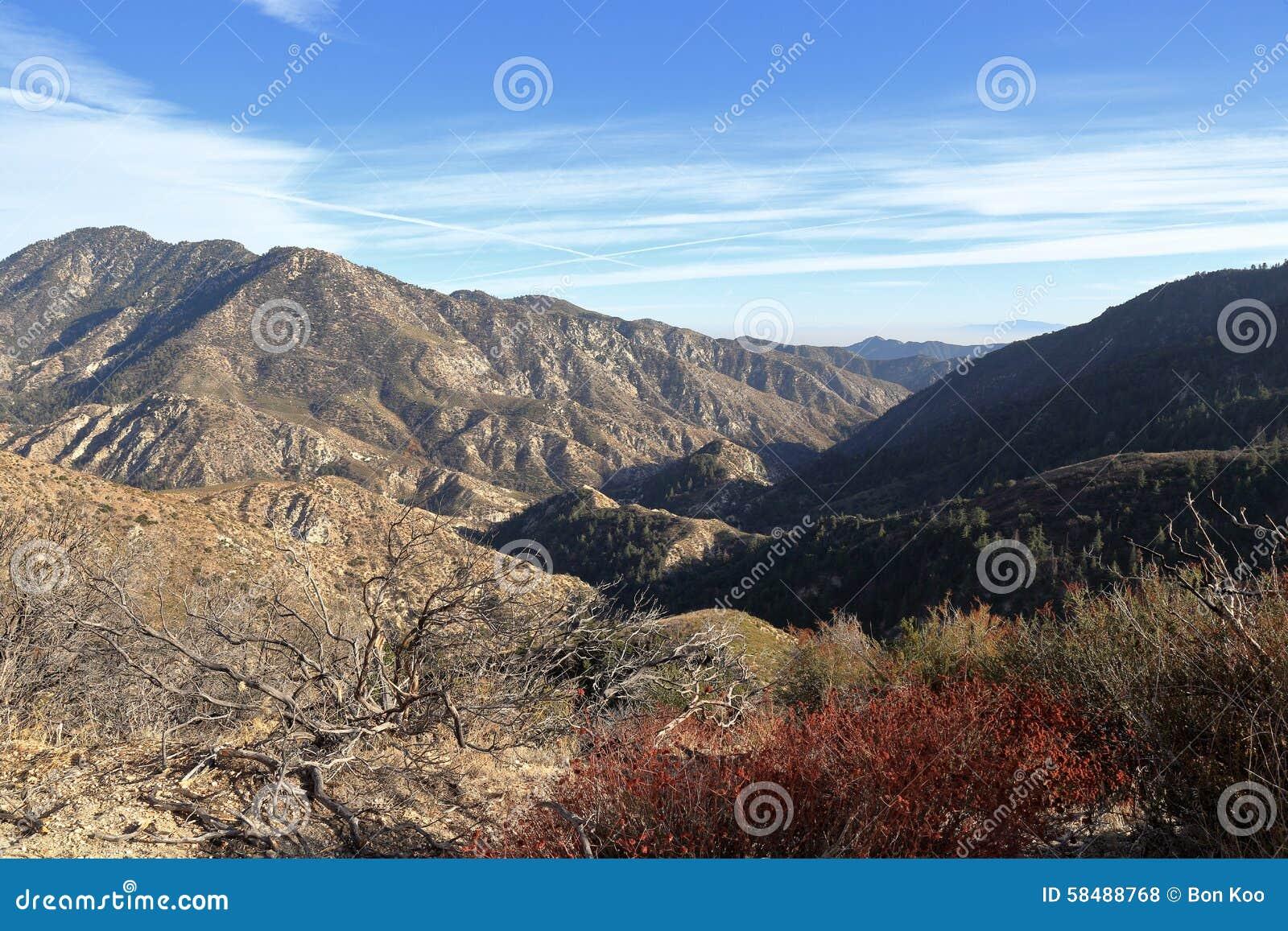 Angeles nationalskog