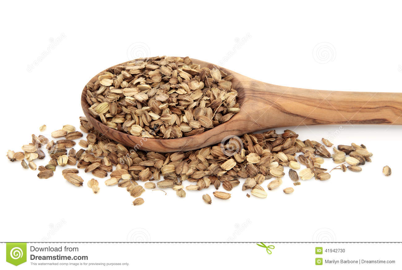 Angelica Herb Seed