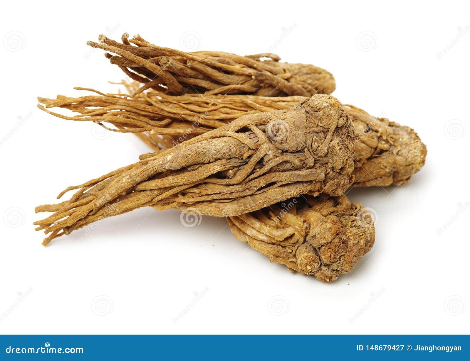 Angelica root