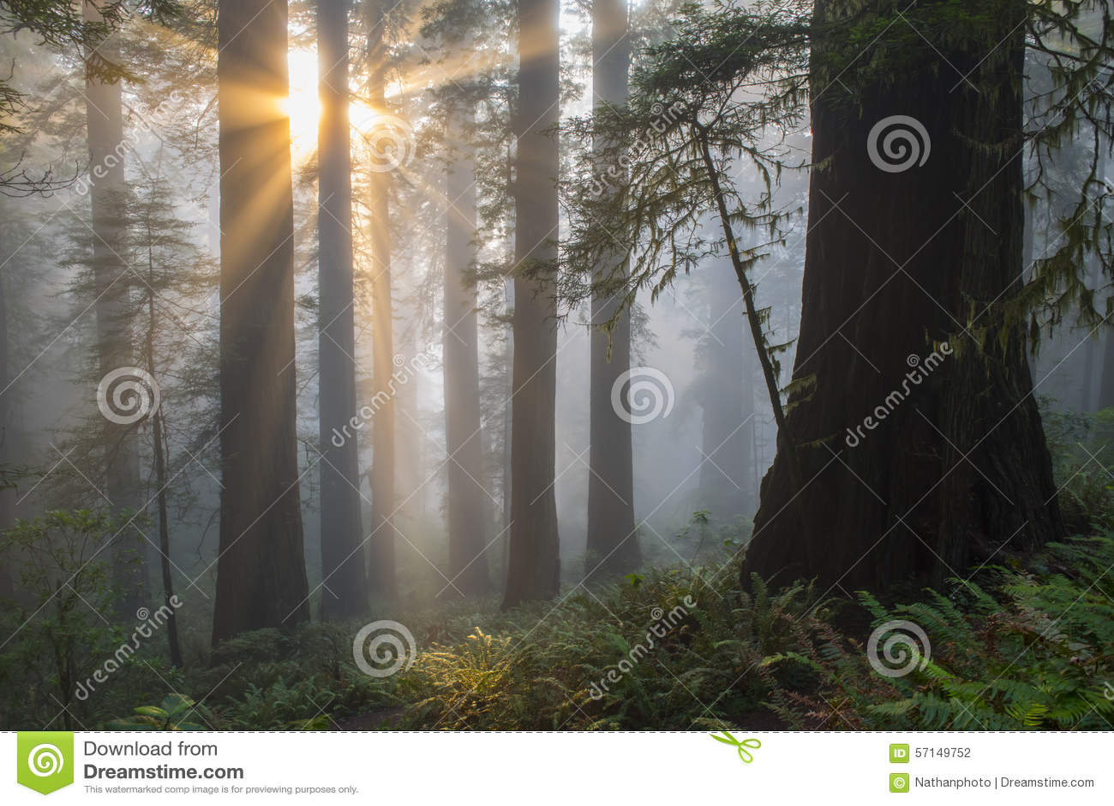 Angelical-como rayos de sol