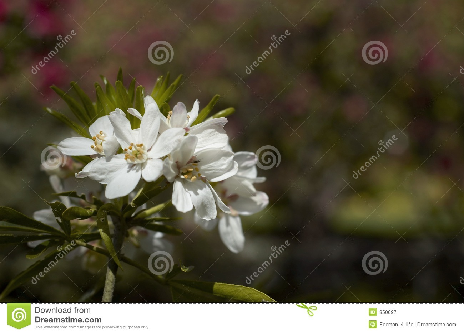 Angestrahlte Blumen