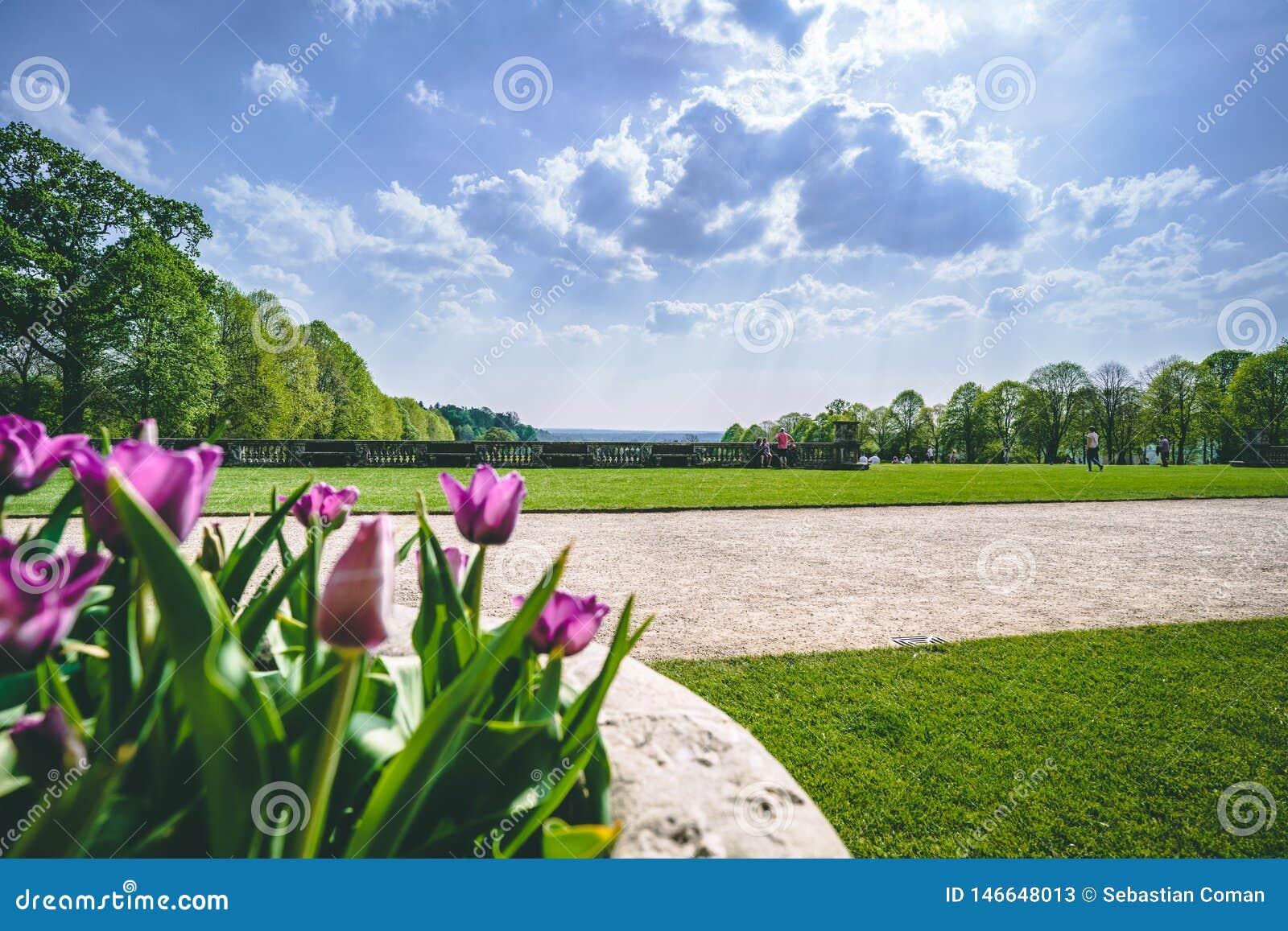 Angielski wiosna ogródu widok z tulipanami