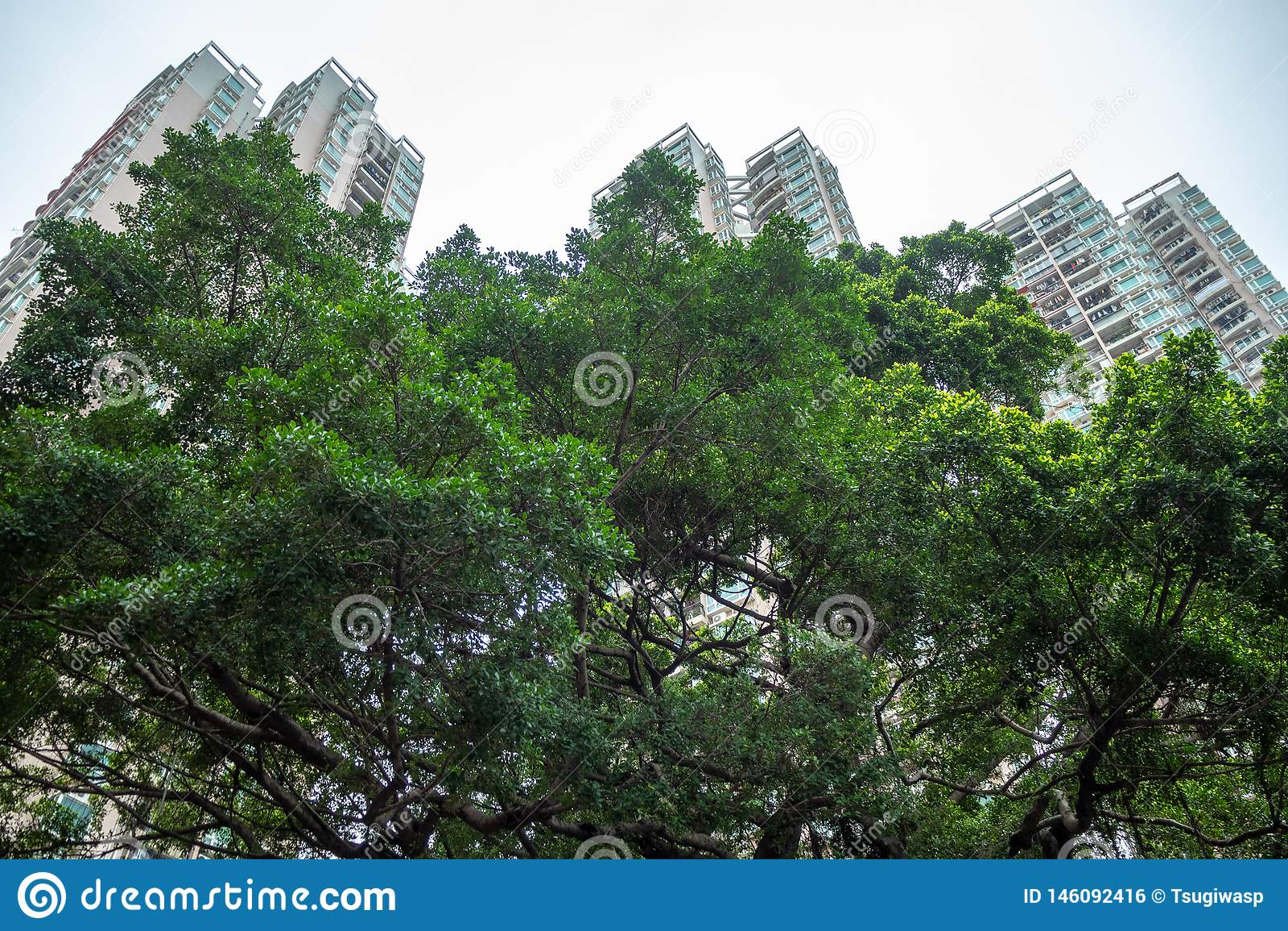 Angle faible d arbre vert frais dans le secteur résidentiel sur des bâtiments et de ciel avec le fond de lumière du soleil