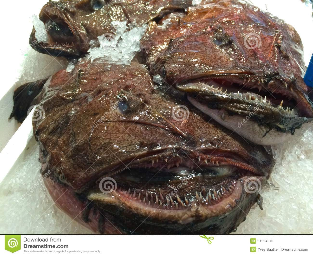 Anglerfish in chinese fish market stock photo image for Oriental fish market